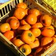 平種柿(ひらたねがき)