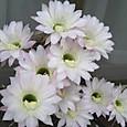 サボテンの花・3