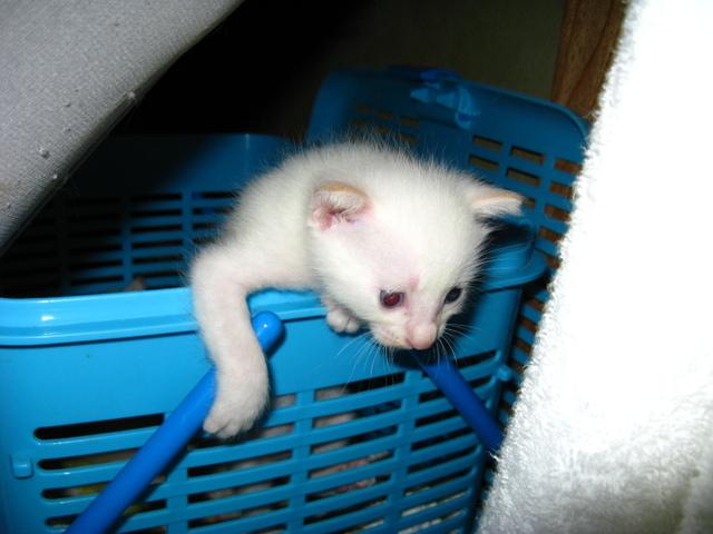 誕生から20日目の子猫