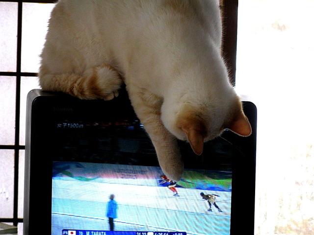 テレビにパンチするポテ
