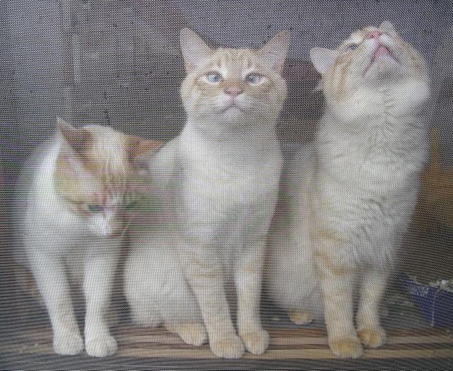 網戸越しの3兄弟