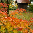 Img_0200  丹羽神社の紅葉
