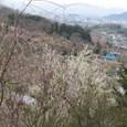 Img_1177 花見山公園