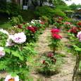 蛇の花遊楽園