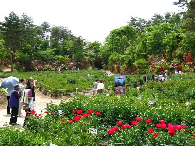 大桑原つつじ園