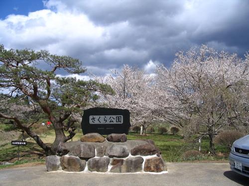 Img_0201 大玉村さくら公園